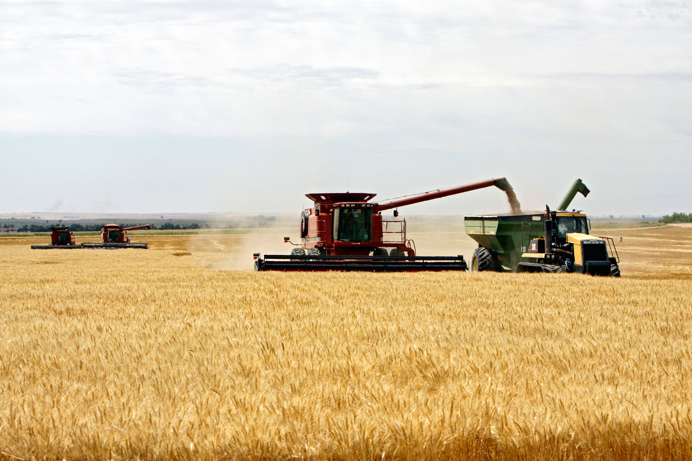 <p>Wheat is harvested on the Cooksey farm near Roggen, Colo., on Thursday, July 9. 2009.</p>