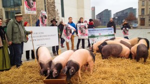 nelson-pig-demo-in-front-of-chancellor-s-office-building-jan-15-2014