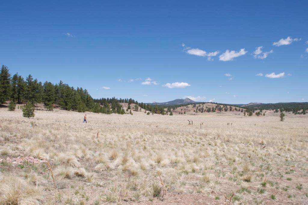 An open meadow edged with pine forest at Florissant Fossil Beds National Monument.