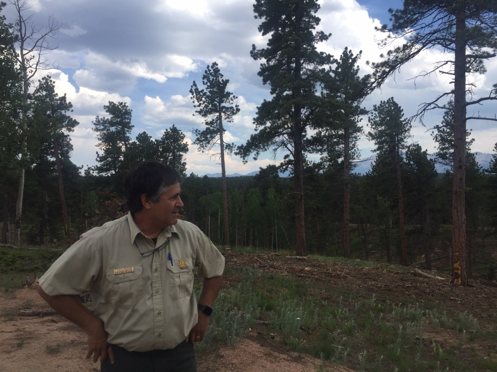 Oscar Martinez with the US Forest Service looks out over a stand of thinned ponderosa pine trees.