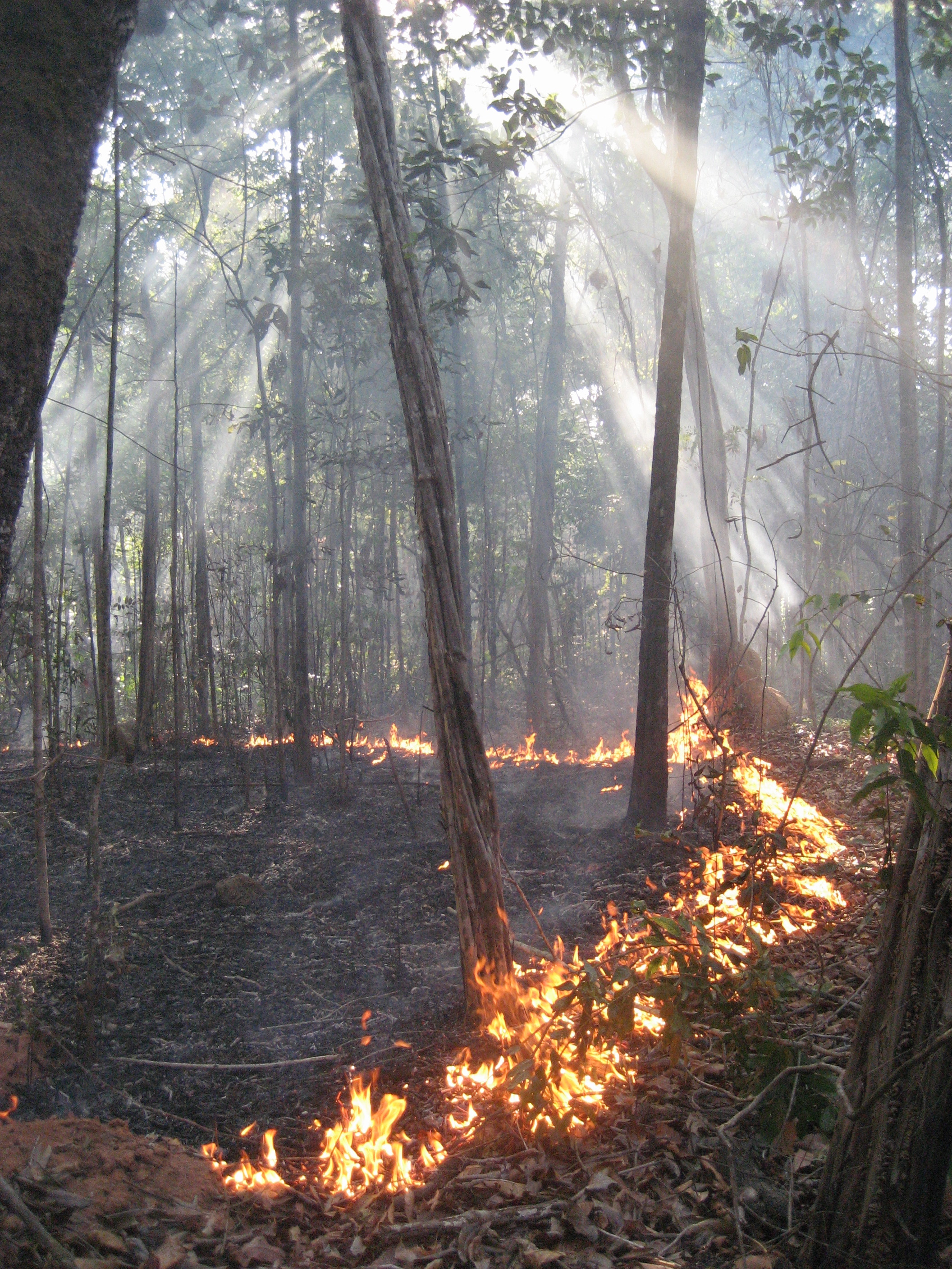 An experimental burn set by CU Earth Lab Director Jennifer Balch and her team on the southern border of the Amazon rainforest in 2006.