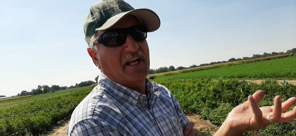 Dr. Mike Bartolo talks about the Pueblo chile near plants that he is developing in Rocky Ford. Bartolo heads up CSU's Arkansas Valley Research Center.