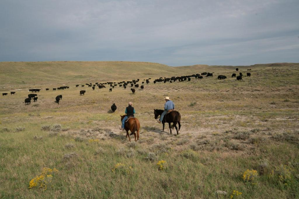 Connie and Craig French move cattle on their ranch near American Prairie Reserve, a sprawling wildlife sanctuary in northeastern Montana.