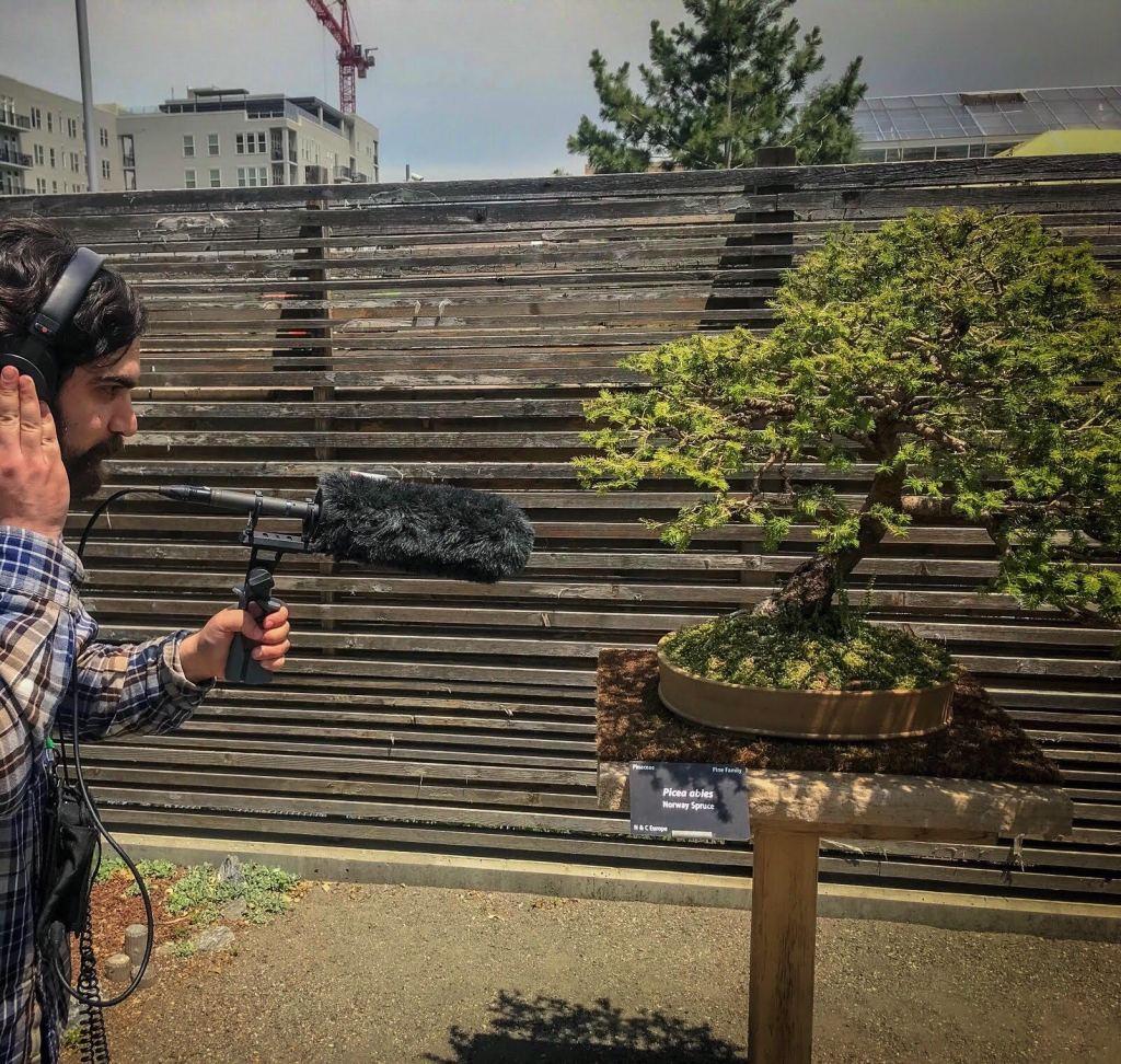 Krcc Presents Lost Highways Episode 2 Bonsai Behind Barbed Wire Colorado Public Radio