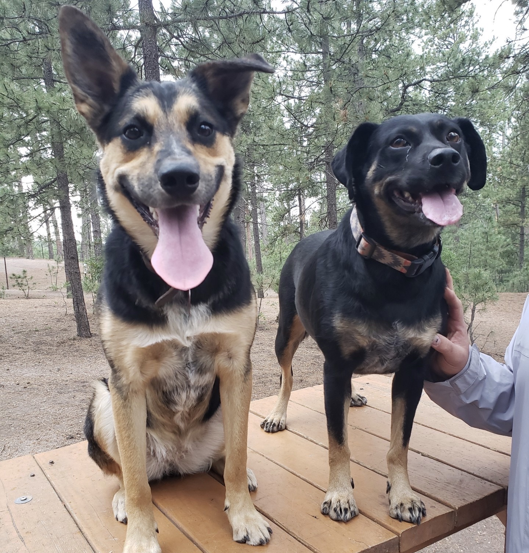 Fox Run Regional Park has two dog parks for four-legged friends to enjoy.