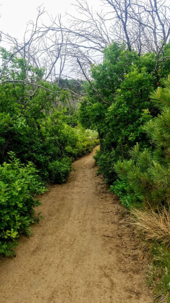 For an easy trek, try the Talon Trails, up to the Dixon Trail.