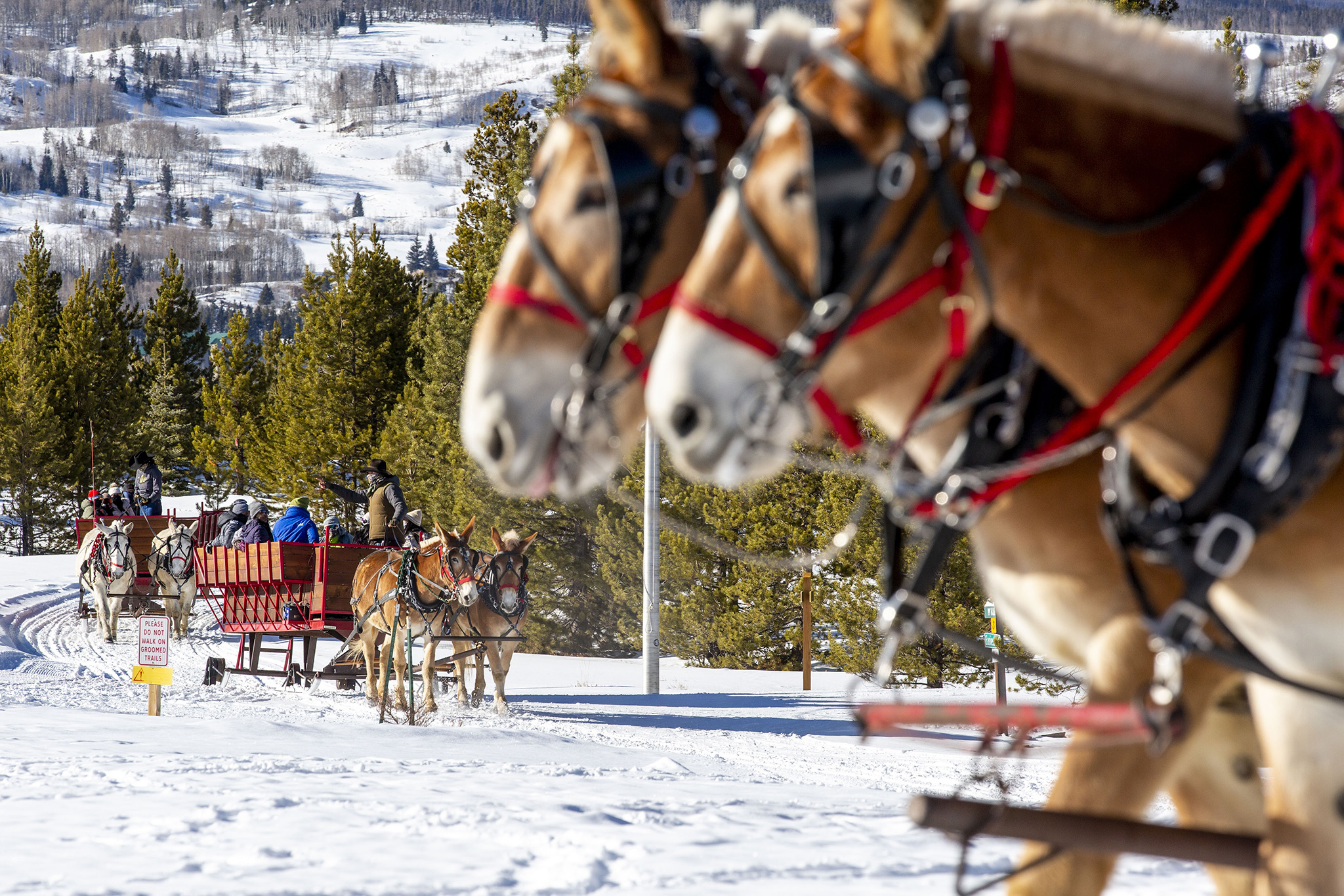 2 Below Zero scenic sleigh rides on the edge of Frisco, Colo. Feb. 25, 2021.