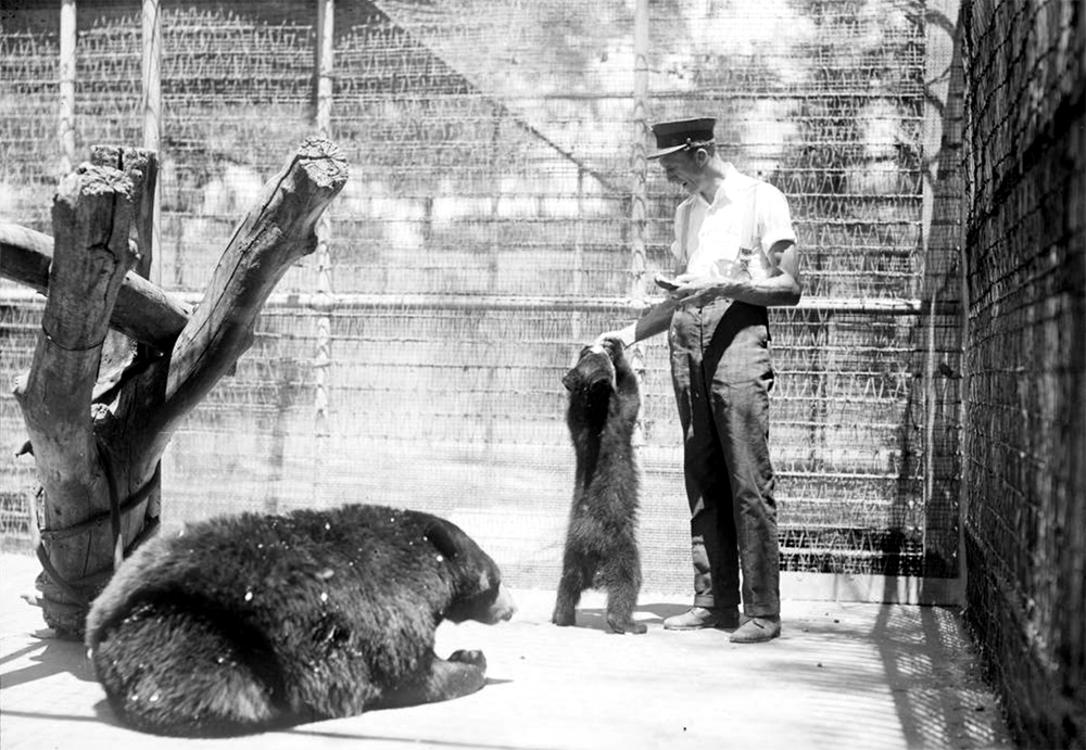 A zookeeper feeds a bear cub at the Denver Zoo in City Park, Denver, Colorado. Between 1910 and 1920. (Harry Mellon Rhoads/Denver Public Library/Western History Collection/Rh-737)  historic; denver public library; dpl; archive; archival; denverite