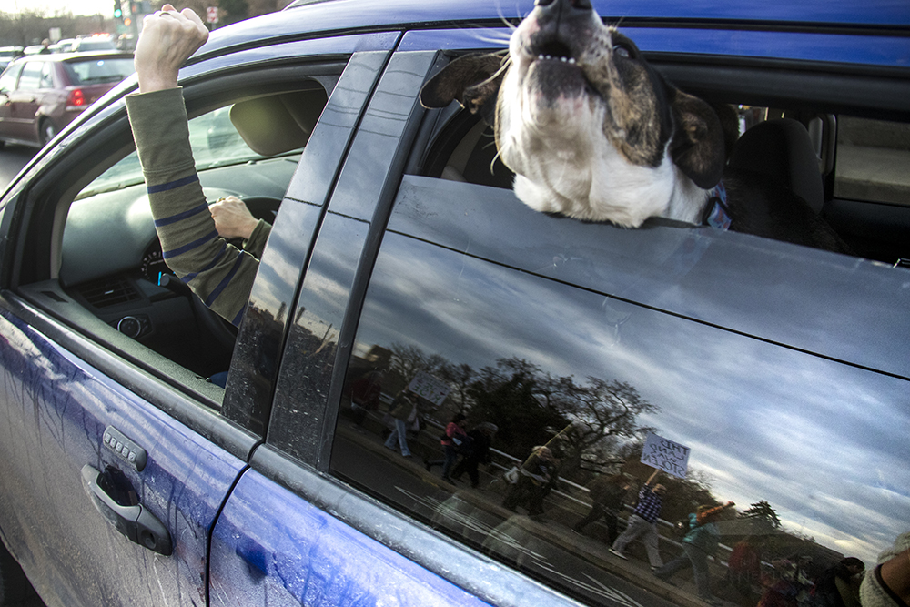 Natalie Mozur-Renn holds a fist out of her car window as protesters march by. A rally against the Dakota Access Pipeline, March 10, 2017. (Kevin J. Beaty/Denverite)  march; protest; rally; sunken gardens; capitol; indigenous; native american; nodapl; dakota access pipeline; standing rock; kevinjbeaty; denver; denverite; colorado;