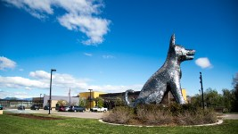 """Sun Spot"" by Laura Haddad and Tom Drugan at the Denver Animal Shelter in Valverde. (Kevin J. Beaty/Denverite)  public art; denver; colorado; denverite; kevinjbeaty; valverde;"