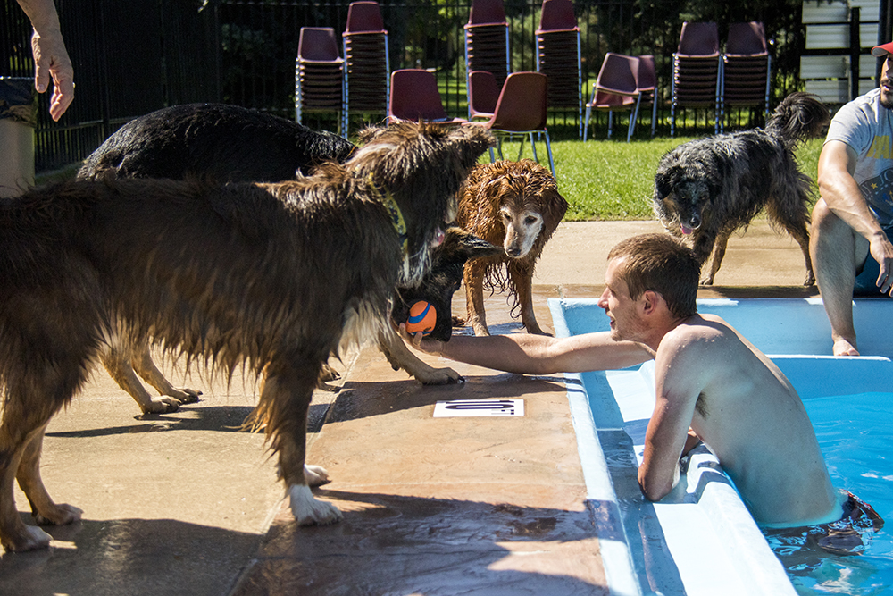 Nate Johnson coaxes dogs to the edge of the pool. Dog-a-Pool-ooza at Cook Park Pool, Aug. 13, 2017. (Kevin J. Beaty/Denverite)  public pool; dogs; pets; Dog-a-Pool-ooza; cook park; denverite; colorado; kevinjbeaty; denver;