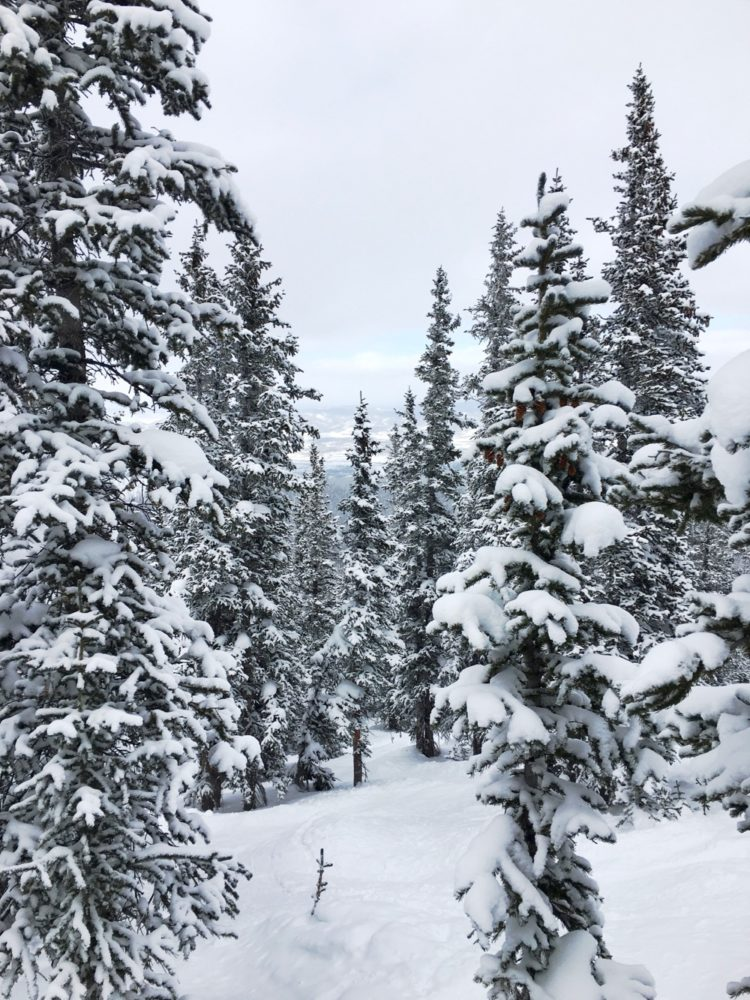 A powder day on Eagle Wind in Winter Park. (Andrew Kenney/Denverite)