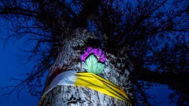A vigil for doomed trees at City Park Golf Course, Oct. 29, 2017. (Kevin J. Beaty/Denverite)  city park golf course; protest; trees; denver; denverite; colorado; kevinjbeaty; skyland;