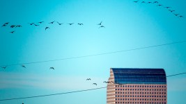 Geese fly above the downtown skyline. (Kevin J. Beaty/Denverite)  cowx; denver; colorado; winter; weather; sunny; kevinjbeaty; denverite;