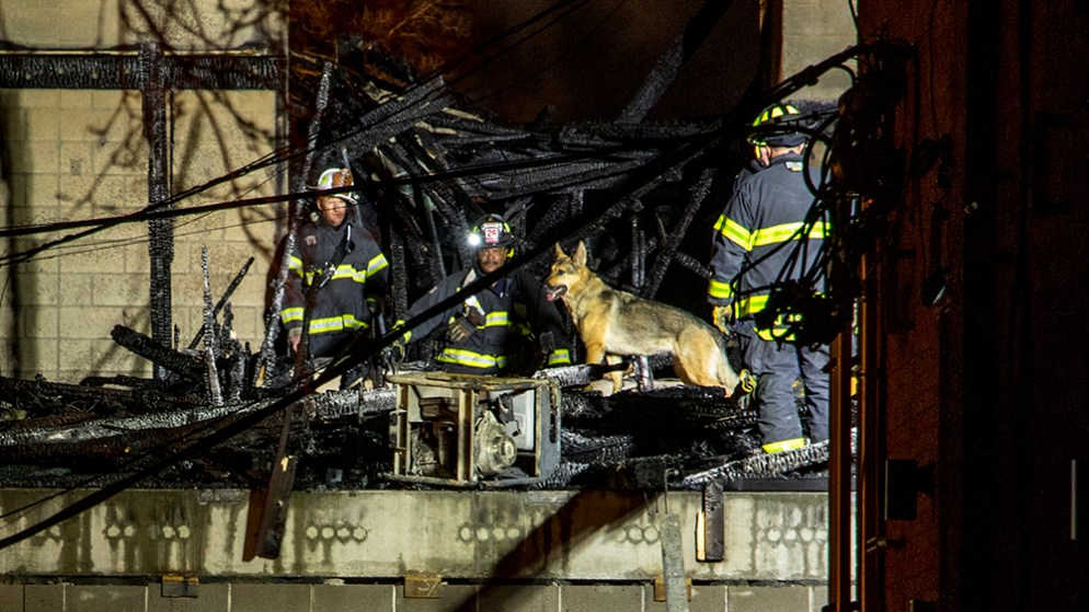 Firefighters inspect a construction site with a cadaver dog after a massive fire near the intersection of 18th Avenue and Emerson Street, March 7, 2018. (Kevin J. Beaty/Denverite)