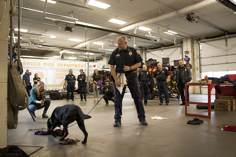 Technician Scott Renter shows off Cora the accelerant-sniffing dog's crime-fighting abilities as she's officially welcomed to her new job with the Denver Fire Department, May 3, 2018. (Kevin J. Beaty/Denverite)  pets; dogs; denver fire department; denver; colorado; denverite; kevinjbeaty;