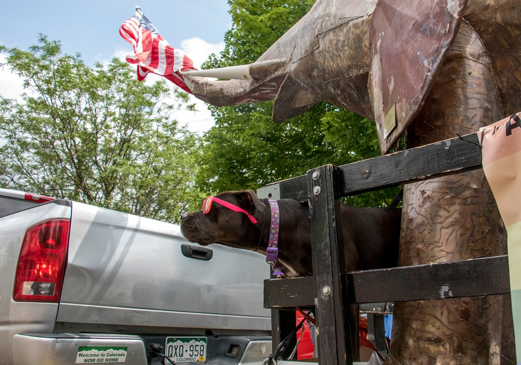Mookie, the Denver GOP party dog, rides a float in the Denver PrideFest parade, June 17, 2018. (Kevin J. Beaty/Denverite)