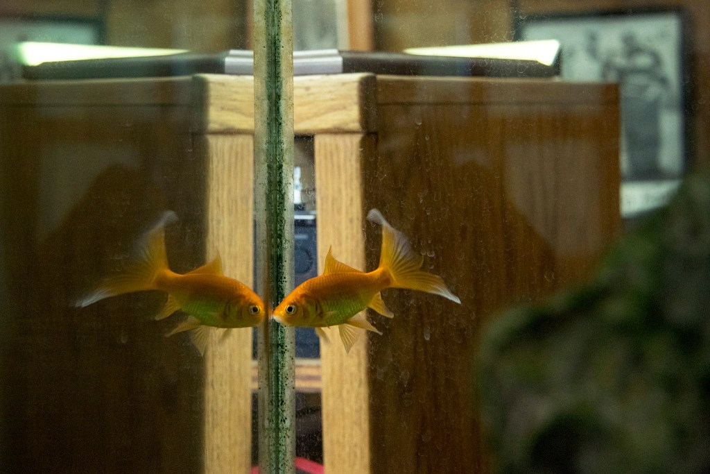 Reverend Leon Kelly's fish inside his office at Open Door Youth Gang Alternatives headquarters downtown, Sept. 26, 2018. (Kevin J. Beaty/Denverite)
