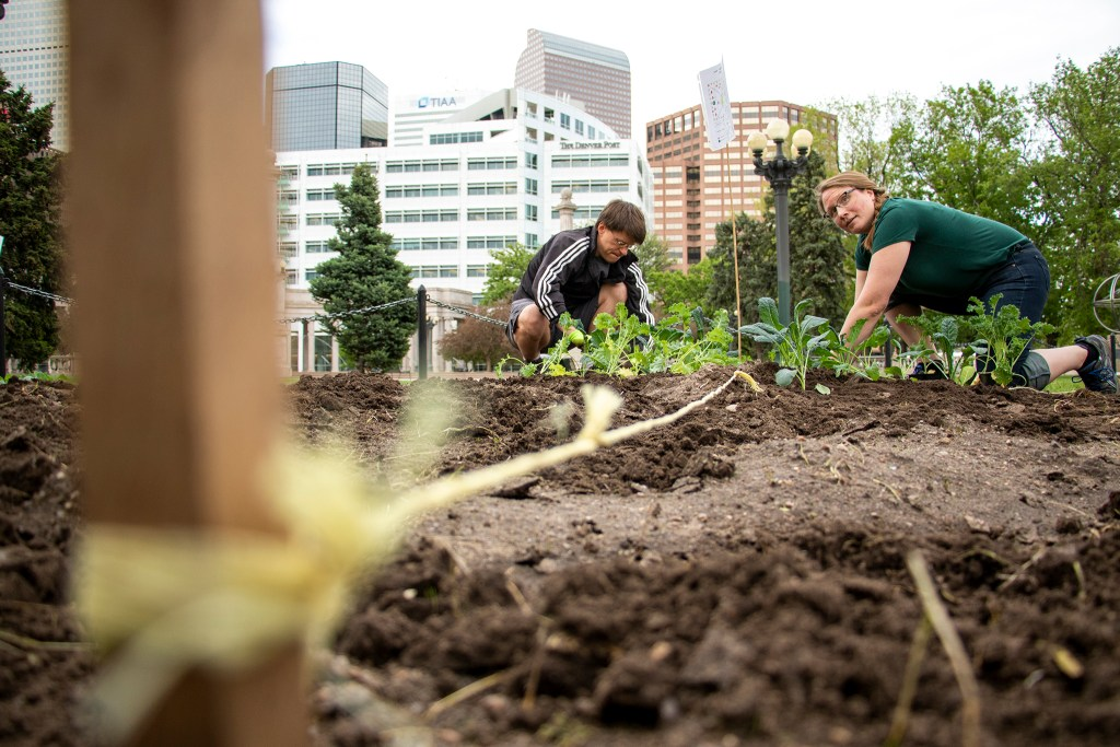 Suzanne Smith (right) plants vegetables in Civic Center Park with the Returned Peace Corps Volunteers of Colorado and Grow Local Colorado, May 30, 2019. (Kevin J. Beaty/Denverite)