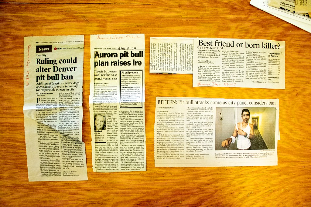 Stories in the Denver Public Library's clippings file on pit bulls. (Denver Public Library/Western History Collection/Clippings Files)