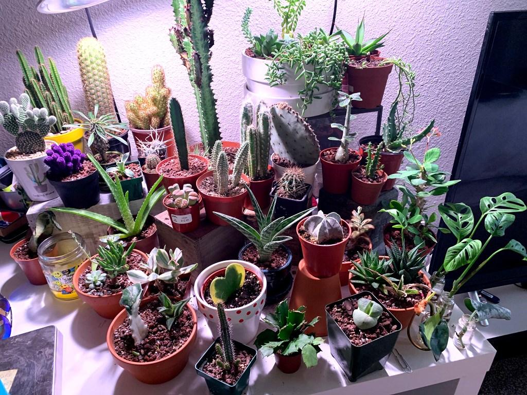 Some of Adam Hamilton and Elizabeth Petrossian's plants. (Courtesy: Adam Hamilton)