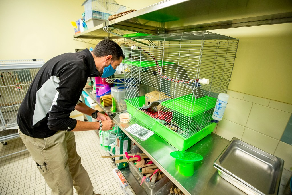 Lt. Josh Rolfe checks in on Ratticus Finch, who is available for adoption at the Denver Animal Shelter. July 10, 2020.
