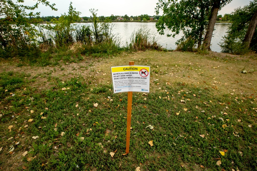 A warning at Sloan's Lake that dogs should not drink the water due to an algae bloom. Aug. 19, 2020. (Kevin J. Beaty/Denverite)
