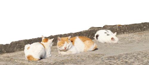 猫タグの例