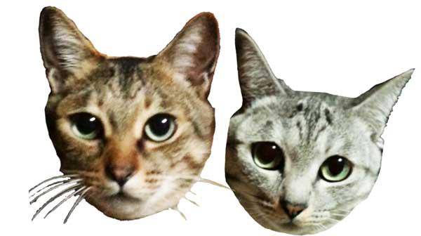 兄弟のような猫たち