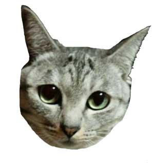 愛猫:しま