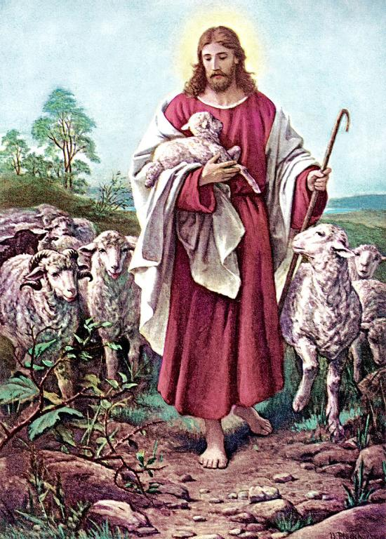 The Relationship Between The Good Shepherd And His Sheep | Jack ...