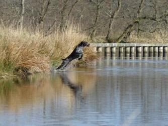 WATERWERK Asta (Cayenne) z Krotejovskych lesu, gecomprimeerd