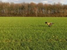 Laatste deel van de drift mag de hond flankeren