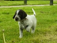 puppy winston1