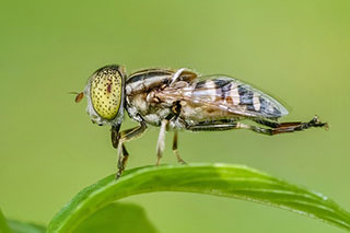 insect-1129237_640