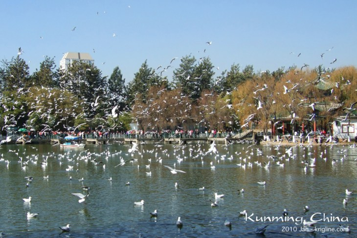 """We lived in Kunming for five wonderful years. One of Vivian's favorite things to do was to visit Green Lake Park, where Siberian seagulls wintered. This is a photo from """"the good ol' days."""""""