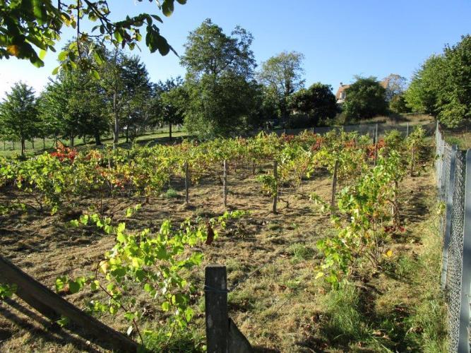 LGY visite le vignoble de Grigny.
