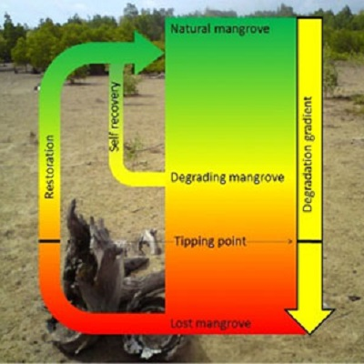 Ecological tipping points in mangrove ecosystems 400 x 400 px