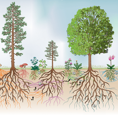 Figure 1 Common mycorrhizal network in a forest 400 x 400 px