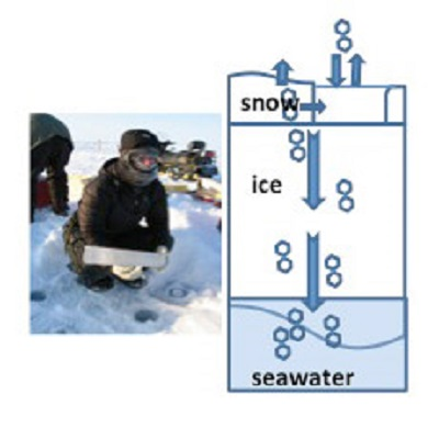 Ice enrichment of chemical pollutants a significant phenomenon in a warmer Arctic 400 x 400 px