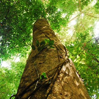 Logging impacts on forest soil biodiversity and function in Borneo 400 x 400 px
