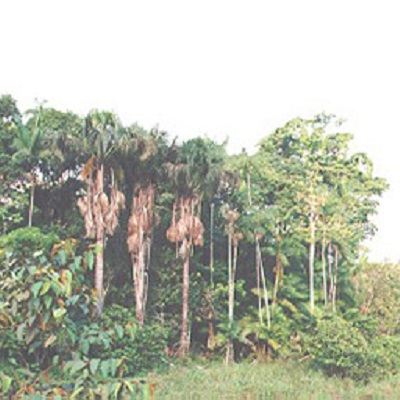 The regrowth of tropical forests remote sensing functional traits of the forest succession 400 x 400 px
