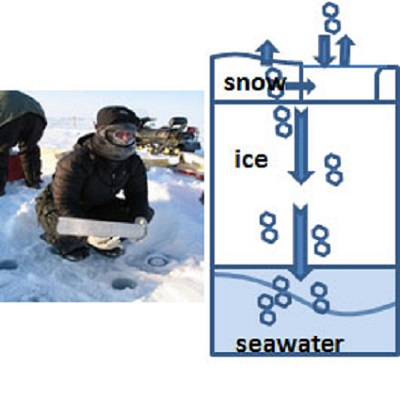 The role of the cryosphere in determining the fate of persistent chemicals in the marine system of the Arctic 400 x 400 px