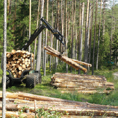 Developing environmentally sustainable forestry value chains