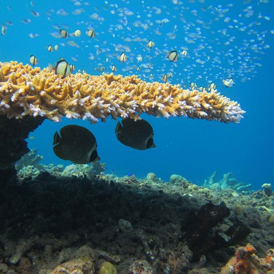 Impact of coral reef fish personalities on species persistence under environmental change