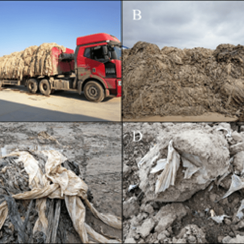 Understanding the behaviour, fate and environmental risk of microplastics in the plant-soil system