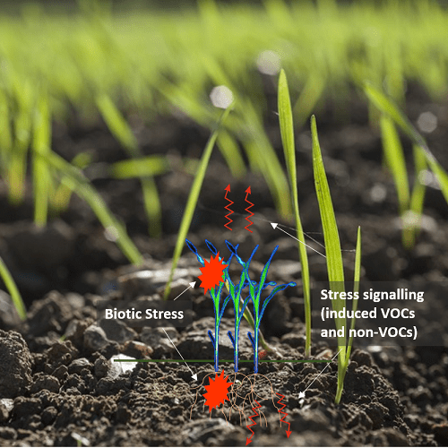Herbivore-Plant-Soil microbe interactions: who is helping whom