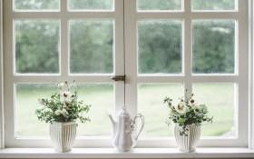 window-flowers
