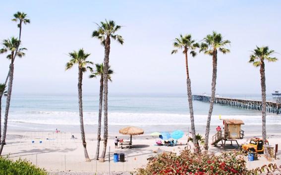 beach-palmstrer