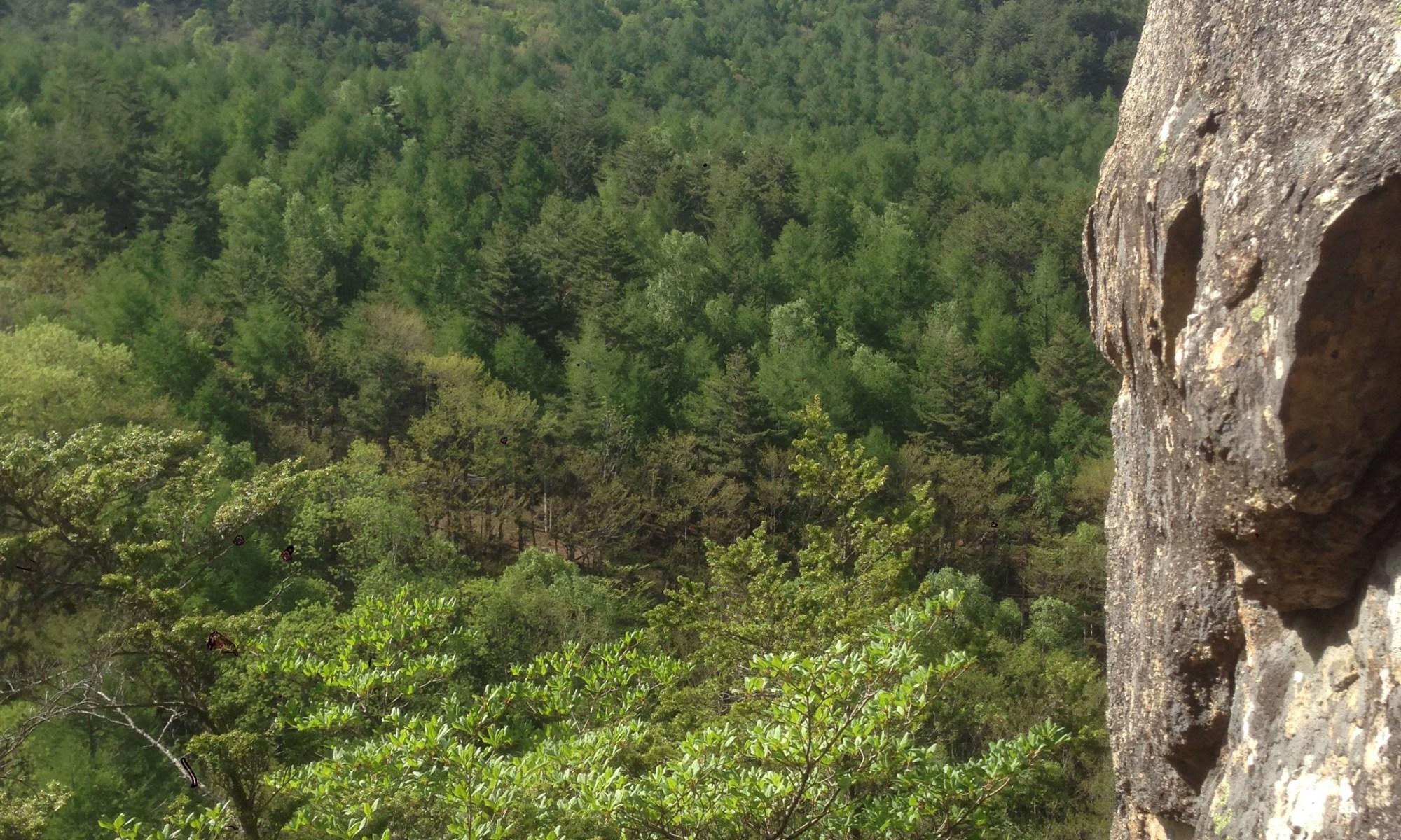 兄から屋根岩を望む。新緑がきれいね〜
